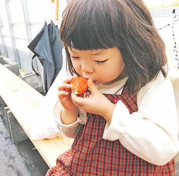 超甘くて大きなイチゴに大満足!大紀町Smile Santaのいちご狩り